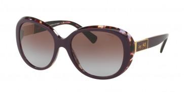 Coach 0HC8120 - L094 Carter Sunglasses Purple Tortoise